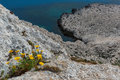 Wild flowers on cliffs Royalty Free Stock Images