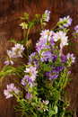 Wild Flowers, Crown Vetch And ...
