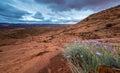 Wild Flowers, dark clouds Utah Royalty Free Stock Photo