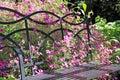 Wild Flowers And Garden Bench