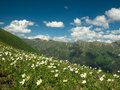 Wild flowers and grass on a background of mountains Royalty Free Stock Photo