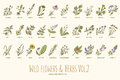 Wild flowers and herbs hand drawn set. Volume 2. Vintage vector illustration. Royalty Free Stock Photo