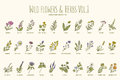 Wild flowers and herbs hand drawn set. Volume 1. Vintage vector illustration. Royalty Free Stock Photo