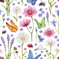 Wild flowers and insects illustration Royalty Free Stock Photo