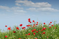 Wild flowers landscape spring season Royalty Free Stock Photo