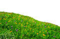 Wild flowers meadow meadow hillside covered wild flowers grass isolated over white background part alpine meadows Stock Photo