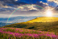 Wild flowers on the mountain hill at sunset Royalty Free Stock Photo