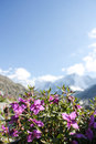 Wild flowers in mountains on green meadow Stock Image