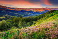 Wild flowers in mountains savory among the grass on the hillside cool early morning Stock Photo