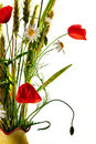 Wild flowers poppy bouquet Stock Photography
