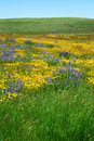Wild flowers on prairie Royalty Free Stock Photo