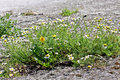 Wild flowers on a rock Royalty Free Stock Photo