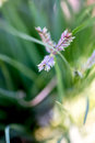 Wild flowers shallow dof close up Royalty Free Stock Photo
