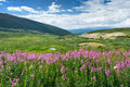 Wild Flowers Summer Mountain Landscape Stock Images