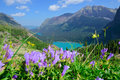 Wild flowers on the trail to Grinnell Glacier and lake in Glacier National Park Royalty Free Stock Photo