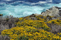 Wild flowers turquoise ocean yellow wildflowers on coastline above Royalty Free Stock Image