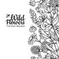 Wild flowers vector drawing set. Isolated meadow plants and leaves Royalty Free Stock Photo