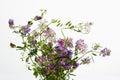 Wild Flowers, Vetch, Crown Vet...