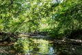 Wild forest with creek - high dynamic range Royalty Free Stock Photo