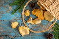 Wild forest mushrooms chanterelles scattered from the basket on old background Royalty Free Stock Photo