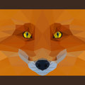 Wild fox stares forward. Nature and animals life theme. Abstract geometric polygonal triangle illustration Royalty Free Stock Photo
