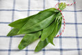 Wild garlic chopped with a knife Stock Image