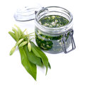 Wild garlic pesto fresh on white ground Royalty Free Stock Image