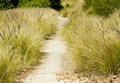 Wild grass along a pathway growing the sides of concrete Royalty Free Stock Photos