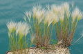 Wild grass on a deserted pier grasses with lake michigan as the backdrop are the only thing alive an abandoned in buffington Royalty Free Stock Photo