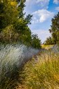 stock image of  Wild grass field. Path in the high grass