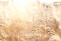 Wild Grasses In A Field