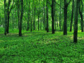 Wild green forest in the early morning Stock Image