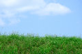 Wild green grass and weeds lawn or field hill against a blue sky with clouds Royalty Free Stock Photo