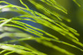 Wild green grass plants macro background Royalty Free Stock Photos