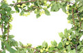 Wild green plums frame Royalty Free Stock Photo