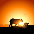 Wild grizzly bears silhouetted against a sunset in the mountains Royalty Free Stock Images
