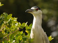 Wild heron in Florida Royalty Free Stock Images
