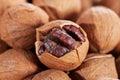 Wild hickory nuts Royalty Free Stock Photo