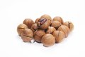 Wild hickory nuts Royalty Free Stock Image