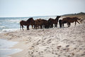 Wild horses on the beach Stock Photo