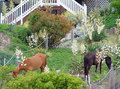 Wild horses eating in flower garden Stock Image