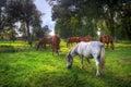 Wild horses on the field Royalty Free Stock Photo