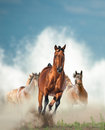 Wild horses herd running by the seashore with splashing waves on background Royalty Free Stock Photo