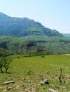 Wild Horses In Meadow Of Mountain Range Stock Image