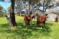 Wild horses in meadow a the snowy mountains australia Stock Photos