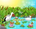 Wild life in the pond vector illustration of with lots of cute animals Royalty Free Stock Photos