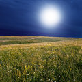 Wild meadow at night moon over the Stock Images