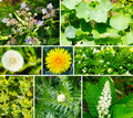 Wild and medicinal herbs in the garden Royalty Free Stock Image