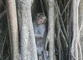 Wild monkey hiding in a tree at forest Stock Photography