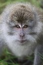 Wild monkey portrait at forest Stock Photo
